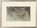 Tropical Cougar Prints by Robert Bateman