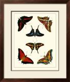 Butterflies II Prints by Pieter Cramer