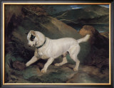 Portrait of a Terrier Framed Giclee Print by Edwin Landseer
