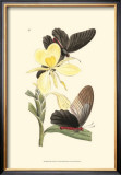 Butterflies and Flora IV Prints by John Westwood