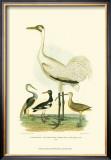 Louisiana Heron Poster by Alexander Wilson
