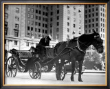 Carriage in Central Park, New York Framed Giclee Print