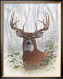 Deer Buck Portrait Print by Ron Jenkins