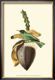 Exotic Birds VIII Prints by Georges Cuvier