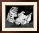 Paws For Thought Prints