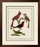 Bird Family IV Prints by A. Lawson