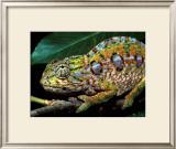 Chameleon, Madagascar Print by Charles Glover