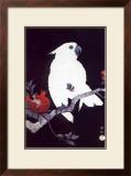 Ukiyo-e Parrot Print by Ohara Shoson