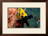 Nudibranch under the Sea, New Zealand Prints by Charles Glover