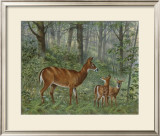 Deer Family I Posters by Ron Jenkins