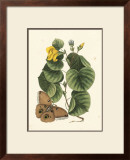 Butterfly and Botanical I Print by Mark Catesby