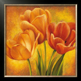 Orange Tulips II Prints by David Pedersen