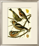Domestic Bird Family II Art by W. Rutledge