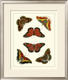 Butterflies I Posters by Pieter Cramer