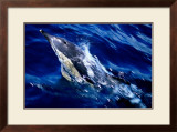 Jumping Dolphin Poster by Charles Glover