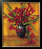 Red Irises Prints by Brian Francis