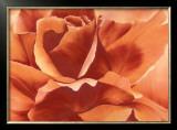 Full in Bloom II Print by Yvonne Poelstra Holzhaus