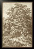 Sepia Oak Tree Prints by Ernst Heyn