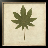 Castor Bean Prints by Becky Davis