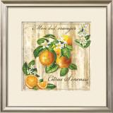 Mon Bel Oranger Prints by Noel Romero