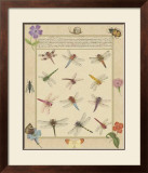 Dragonfly Manuscript II Prints by Jaggu Prasad