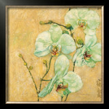 Splendido Orchidea Posters by Matina Theodosiou