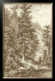 Sepia Noble Fir Prints by Ernst Heyn