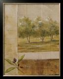 Olive Groves I Art by Cheryl Martin
