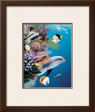 Dolphin's Reef Framed Giclee Print by Mark Mackay