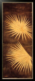 Fan Palm Triptych I Prints by David Parks
