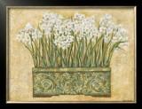 White Narcissus Print by Eva Misa