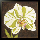 Surabaya Orchid I Art by Judy Shelby