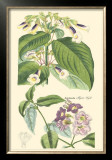 Botanical II Prints by Jacob Dietrich