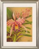 Pink Cattleya Framed Giclee Print by  Hale Pua Studio