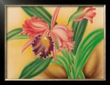 Pink Cattleya Orchid Art by Moki Hana