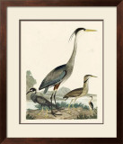 Heron Family I Art by A. Wilson