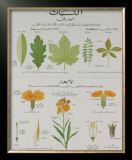 Plants and Leaves Teaching Chart Posters by DEYROLLE 