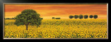 Field of Sunflowers Prints by Richard Leblanc