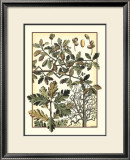 Arts and Crafts Oak Prints by M.P. Verneuil