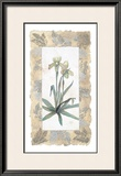 Elegant Orchid Prints by George Caso
