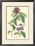 Botanical III Prints by Jacob Dietrich