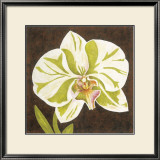 Surabaya Orchid I Posters by Judy Shelby