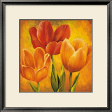Orange Tulips I Prints by David Pedersen