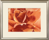 Full in Bloom II Print by Yvonne Poelstra Holzhaus