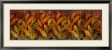 Coral Fields Posters by Elizabeth Jardine