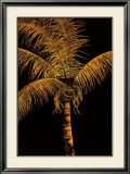 Palm Oro Art by Robert Charles Dunahay