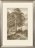 Sepia Wild Pine Prints by Ernst Heyn