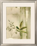 Vizcaya Ferns II Prints by Muriel Verger