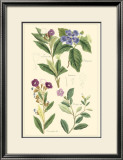 Botanical I Art by Jacob Dietrich