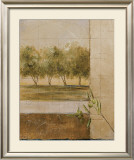 Olive Groves II Poster by Cheryl Martin